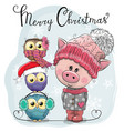 greeting christmas card cute pig and three owls vector image