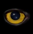 owl eye macro vector image vector image