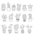 set of 16 cactuses and succulents in flower pots vector image vector image