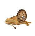 african lion lying vector image vector image