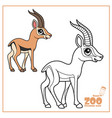 cute cartoon little gazelle color and outlined on vector image vector image
