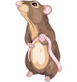 cute mice vector image