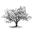 Hand sketch tree Flowering cherry vector image vector image