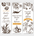 background sketch herbs and spices banner vector image vector image