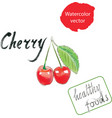 cherry watercolor watercolor vector image vector image
