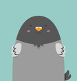 cute big fat pigeon bird vector image vector image