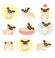 set cute pugs vector image