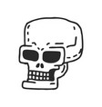 skull cartoon skeleton head drawing on white vector image