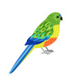 tropical parrot character vector image