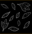 collection of foliage and branches vector image vector image