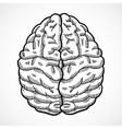 Human brain sketch vector image