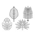 palm trees leaves set sketch engraving vector image