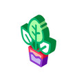 plant in pot isometric icon vector image vector image
