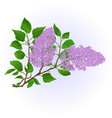Twig lilac with flowers and leaves vintage