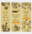background sketch herbs and spices banner vector image