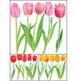 Beautiful tulips in different color vector | Price: 1 Credit (USD $1)