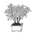 camellia plant sketch engraving vector image