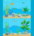 colorful cartoon aquarium fishes set promo poster vector image