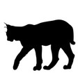 silhouette of the lynx on a white background vector image vector image