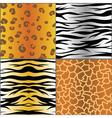 set of animal skins vector image