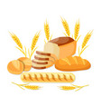 whole wheat bread vector image