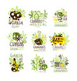 medical cannabis colorful graphic design template vector image