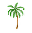 a palm tree vector image vector image