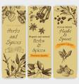 background sketch herbs card - bay leaf