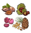 Collection of walnuts chestnuts pine nuts and vector image vector image