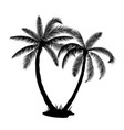 a palm tree silhouettes vector image vector image