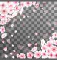 Blooming cherry Spring background Falling sakura vector image