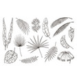 hand drawn exotic leaves tropical plants nature vector image vector image