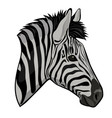 zebra head isolated on a white background vector image vector image