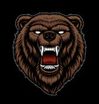 a colorful grizzly head vector image vector image