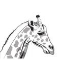giraffe drawing icon vector image