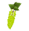 hand drawn branch green grapes berries with leaves vector image