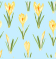 yellow crocuses flowers seamless pattern vector image vector image