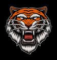 a colorful tiger head vector image vector image