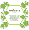 coriander leaves banner on white background vector image