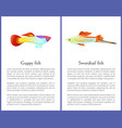 guppy and swordtail fish isolated on white icons vector image vector image