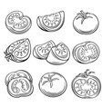 hand drawn tomato set vector image vector image