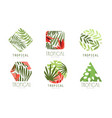 tropical logo design collection geometric badges vector image vector image