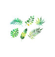green tropical palm leaves collection beautiful vector image vector image