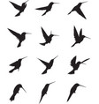 hummingbird silhouettes vector image vector image