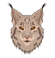 lynx head isolated on a white background vector image vector image