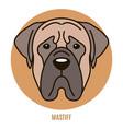 portrait mastiff vector image vector image