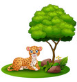 cartoon leopard lay down under a tree on a white b vector image vector image