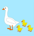 white goose and geese vector image