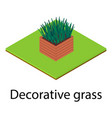 decorative grass icon isometric style vector image vector image