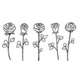 hand-drawn blossom rose flower stem isolated set vector image